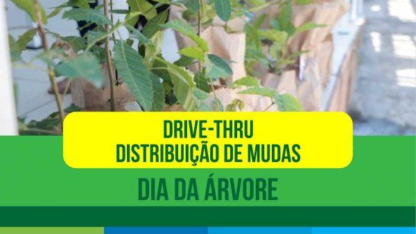 Dia da árvore: São Pedro da Aldeia terá drive-thru para distribuição de mudas